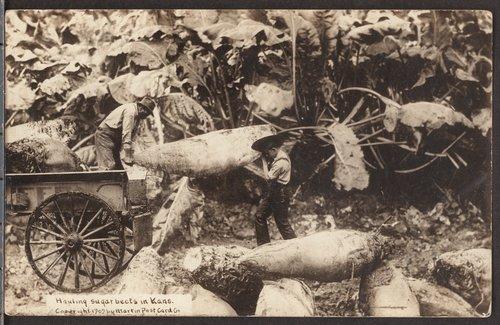 Hauling sugar beets in Kansas - Page