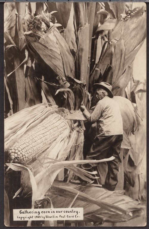 Gathering corn in our country - Page