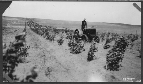 Cultivating trees in Pratt County, Kansas - Page