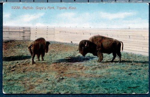 Buffalo, Gage's Park, Topeka, Kansas - Page