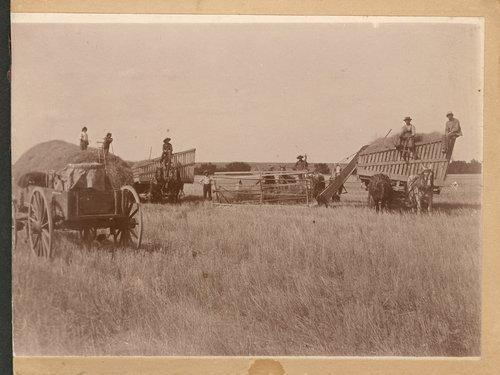 Harvesting, Kinsley, Kansas - Page