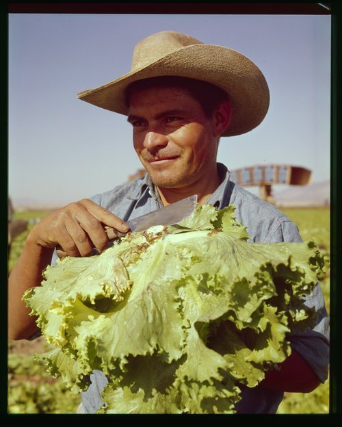 "Mexican ""Bracero"", Blythe, California - Page"