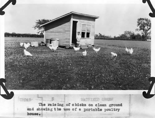 Chickens and a poultry house in Chase County, Kansas - Page