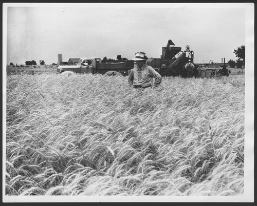 Farmer standing in a wheat field - Page