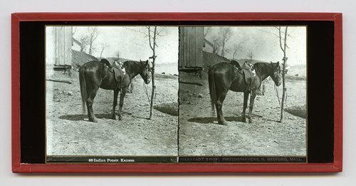 Indian pony, Kansas Territory - Page