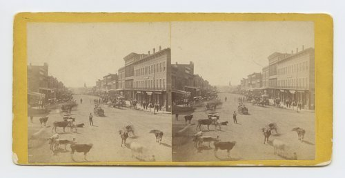 Massachusetts Street, Lawrence, Kansas (Cattle in foreground), Lawrence, Kansas. 323 miles west of St. Louis, Mo. - Page