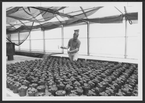 Greenhouse and gardens, Menninger Clinic in Topeka, Kansas