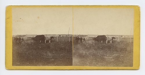 Cattle yard at Moore's Summit, on branch road between Lawrence & Leavenworth, Kansas - Page