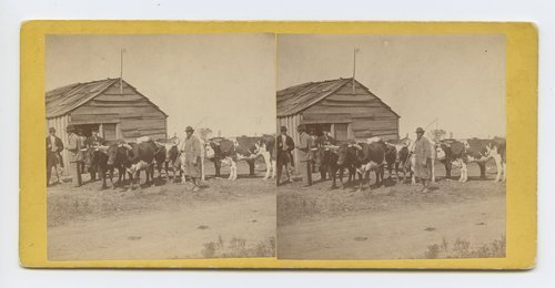 Ox team at Tonganoxie, on branch road between Leavenworth and Lawrence, Kansas - Page