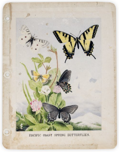 Pacific Coast spring butterflies - Page