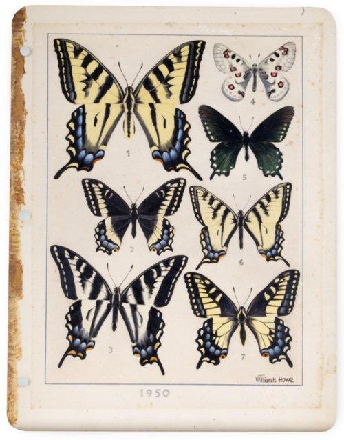 Swallowtail Butterflies - Page