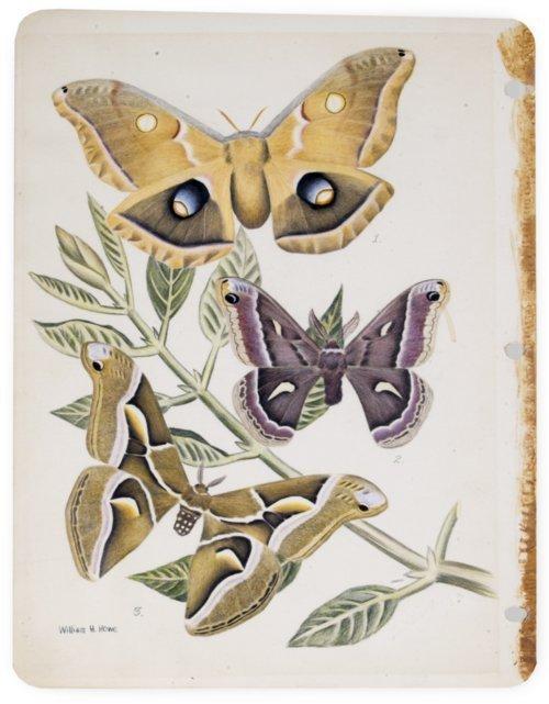 Moth illustration - Page
