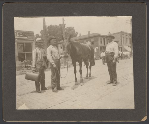 Veterinarian treating a horse in Topeka, Kansas - Page