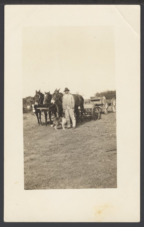 Farmer with a team of mules and horses - Page