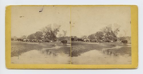 Cattle fording the Smoky Hill River at Ellsworth, Kansas. On the old Santa Fe crossing 508 miles west of St. Louis, Mo. - Page