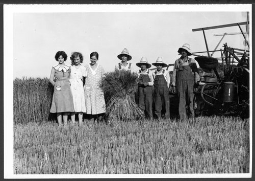 Wheat harvest, Sedgwick, Kansas - Page
