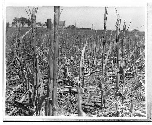 Cornfield, Shawnee County, Kansas - Page