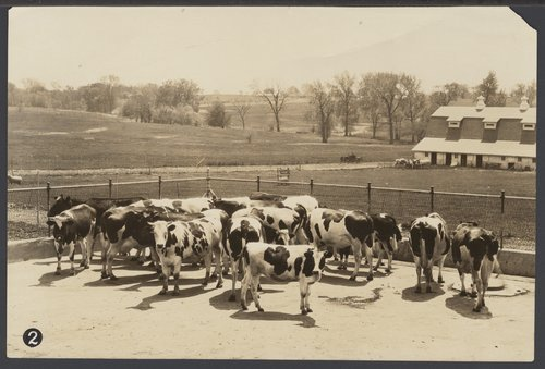 The dairy herd of the Security Benefit Association farms in Topeka, Kansas - Page