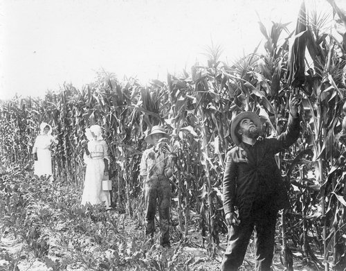J. W. Wampler's corn field in Finney County, Kansas - Page