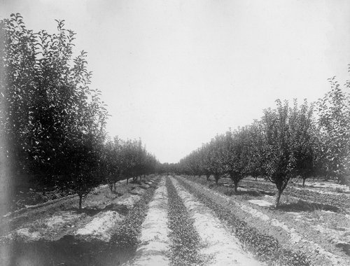 Logan's orchard, Finney County, Kansas - Page