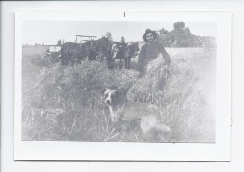 Frances Martinek shocking oats, Rossville, Kansas - Page