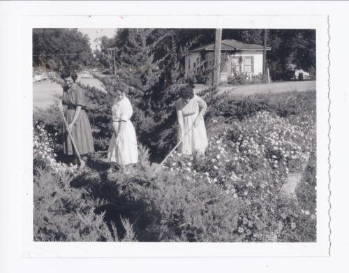 Three women gardening, Rossville, Kansas - Page