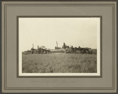 Harvesting wheat near Geneseo, Kansas - Page