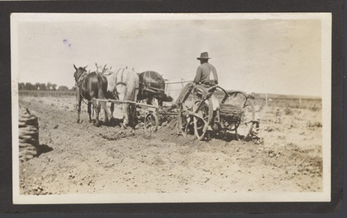 Digging potatoes on Melvin Kelsey's farm in Shawnee County, Kansas - Page