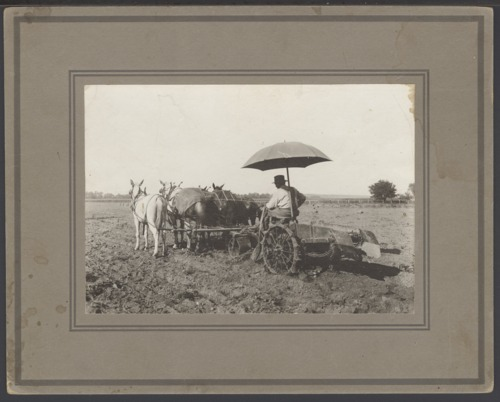 Scott Kelsey digging potatoes near Topeka, Kansas - Page