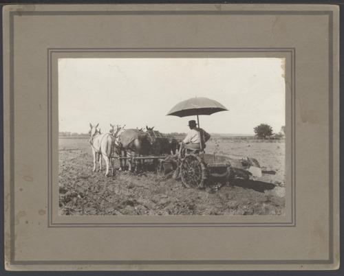 Scott Kelsey digging potatoes near Topeka, Kansas - Page