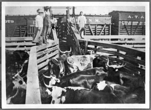 Cattle pens and railroad cars at Silkville, Kansas - Page