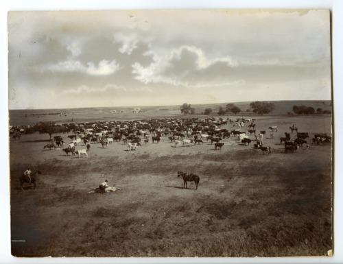 Greenleaf Ranch, Kiowa County, Kansas - Page