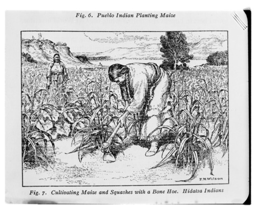 Hidatsa Indian women cultivating crops - Page