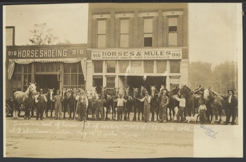 Horses sold at auction in Topeka, Kansas - Page