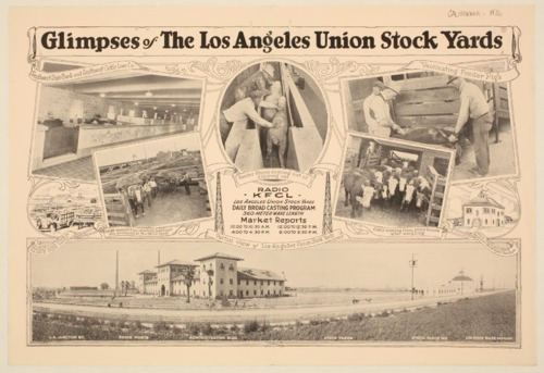 Glimpses of the Los Angeles union stock yards - Page