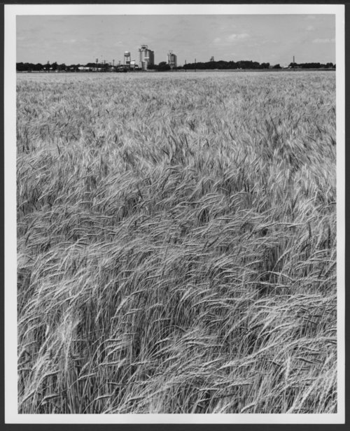 Wheat field near Sublette, Kansas - Page