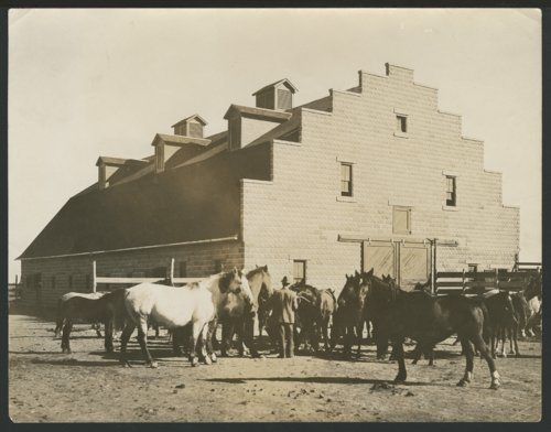 Man with horses at a barn, possibly in Liberal, Kansas - Page