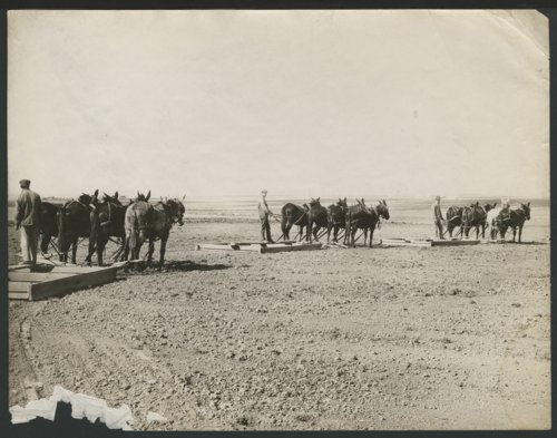 Three teams of horses pulling wooden sleds possibly in Seward County, Kansas - Page