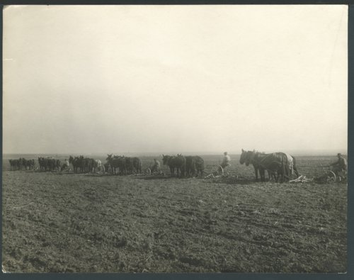 Farmers plowing a field possibly in Seward County, Kansas - Page