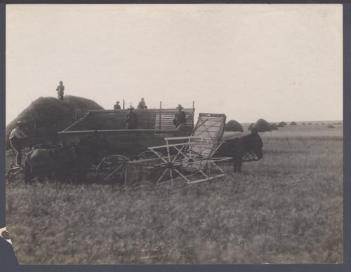 Harvesting wheat possibly in Seward County, Kansas - Page