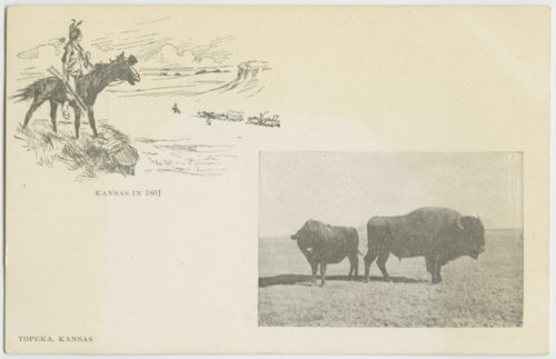 Bison in Kansas - Page