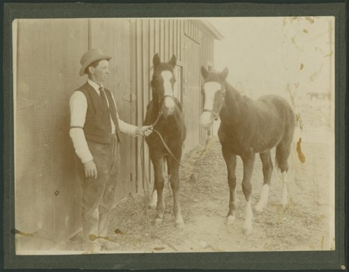 Jim Le Monmier with two foals - Page