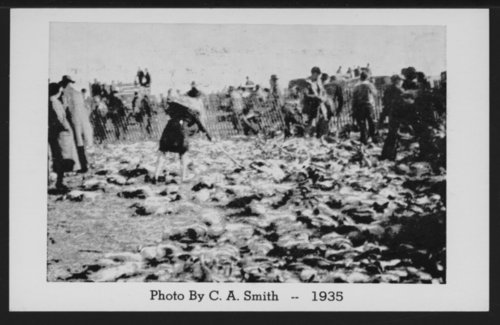 Western Kansas Jack Rabbit Roundup - Page