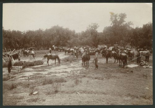 Cowboys with their horses in Seward County, Kansas - Page