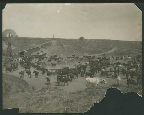 Cattle and a barn in Seward County, Kansas - Page