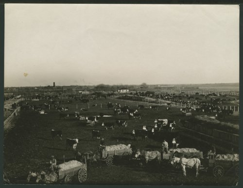 Cattle ranch in Seward County, Kansas - Page
