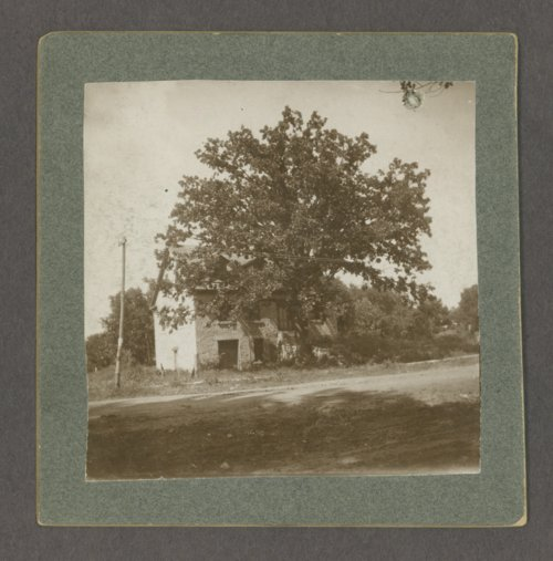 "An original ""Council Grove"" tree, Council Grove, Kansas - Page"