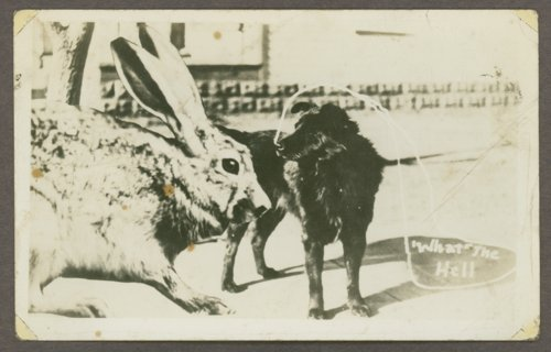 Dog with a giant rabbit - Page