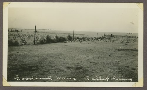 Rabbit drive near Goodland, Kansas - Page
