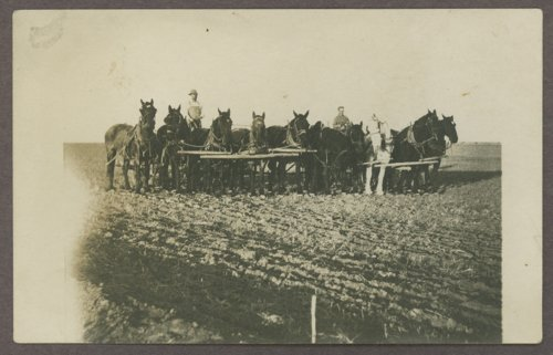 Horse drawn plows - Page